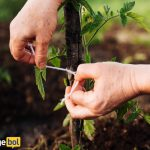 Can Gardening be a Promising Career in India 2020